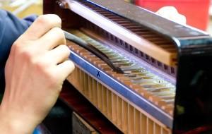 Fabricante acordeones